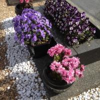 assortiments fleurs de saison